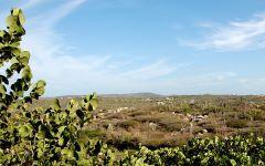 Aruba's natuur en landschap - klein