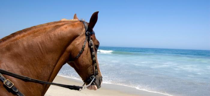 Lekker op het strand paardrijden
